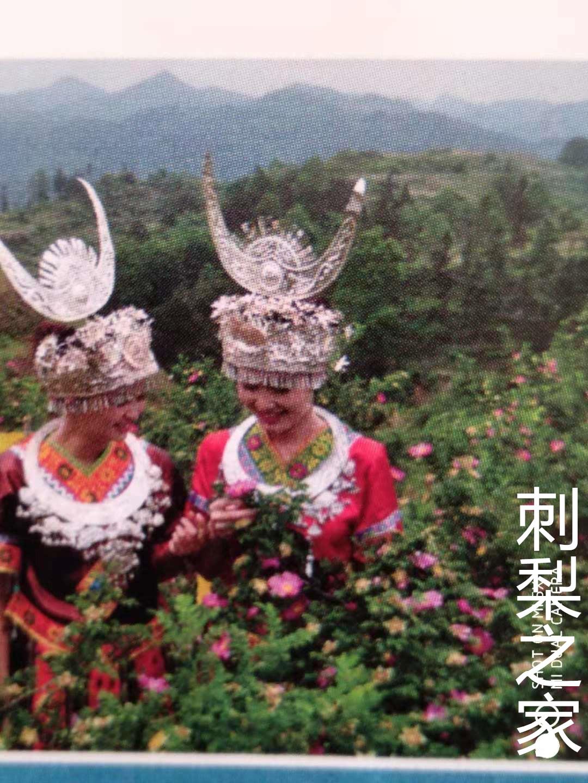 贵州少数民族