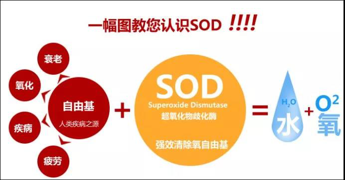 "SOD是什么?原来它一直在默默的""工作""着,你却不知其存在!"